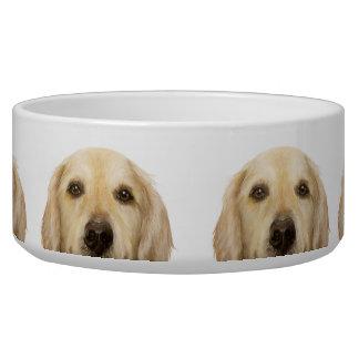 Labrador Retriever, water bowl by miart