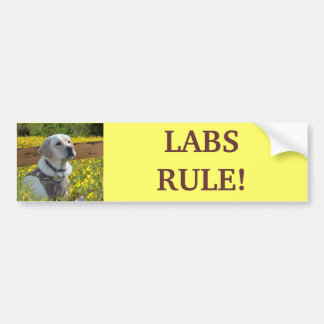 Labrador Retriever Yellow Flowers Bumper Sticker
