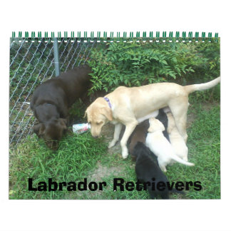 Labrador Retrievers Wall Calendar