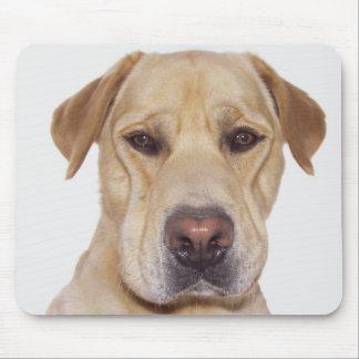 Labrador serious frontal face portrait mouse pad
