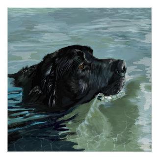 Labrador Swimming Poster