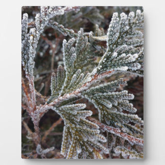 Lace on twigs plaque