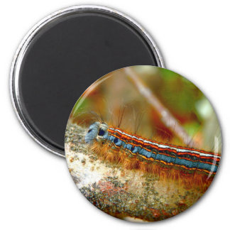 Lackey Moth Caterpillar Magnet