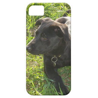 Lacquer Black German Shepherd Case For The iPhone 5