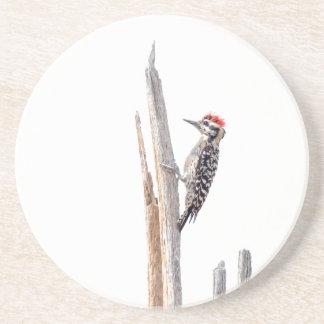 Ladder-Backed Woodpecker Coaster