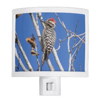 Ladder-backed Woodpecker Nite Lites