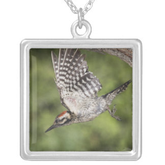 Ladder-backed Woodpecker, Picoides scalaris, Silver Plated Necklace