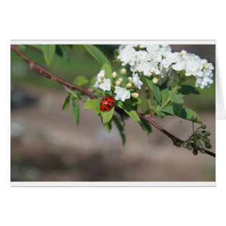 Lady Bug and White Flowers Card