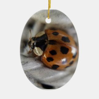 Lady Bug Ceramic Oval Ornament