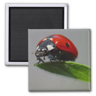 lady bug magnet