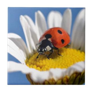 Lady bug on daisy tile