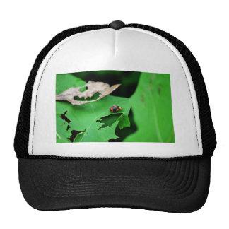 LADY BUG ON LEAF AUSTRALIA TRUCKER HAT