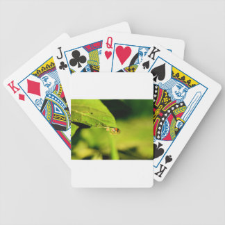 LADY BUG ON LEAF QUEENSLAND AUSTRALIA BICYCLE PLAYING CARDS