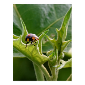 LADY BUG ON LEAF QUEENSLAND AUSTRALIA POSTCARD