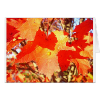 Lady Bug on Red Maple leaf Greeting Card
