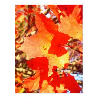Lady Bug on Red Maple leaf Postcard