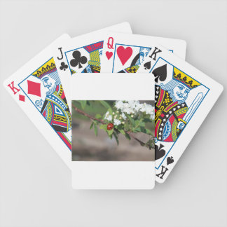 Lady Bug resting near so white flowers in bloom Bicycle Playing Cards
