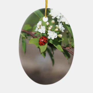 Lady Bug resting near so white flowers in bloom Ceramic Oval Ornament