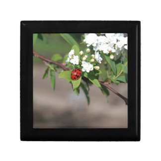 Lady Bug resting near so white flowers in bloom Gift Box