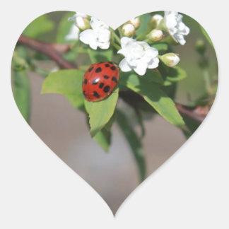 Lady Bug resting near so white flowers in bloom Heart Sticker