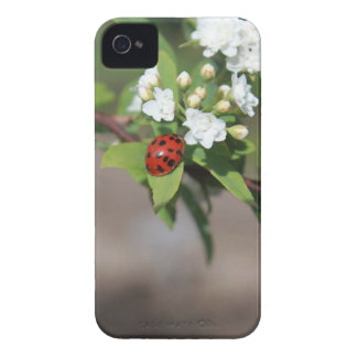 Lady Bug resting near so white flowers in bloom iPhone 4 Cover