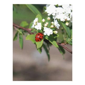 Lady Bug resting near so white flowers in bloom Letterhead
