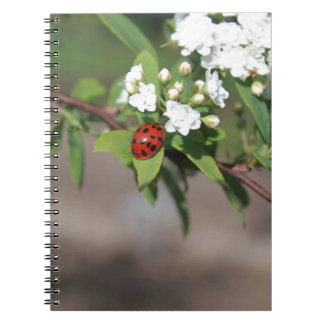 Lady Bug resting near so white flowers in bloom Notebook
