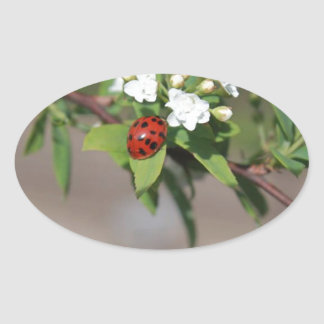 Lady Bug resting near so white flowers in bloom Oval Sticker