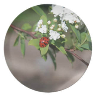 Lady Bug resting near so white flowers in bloom Plate