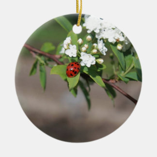 Lady Bug resting near so white flowers in bloom Round Ceramic Ornament