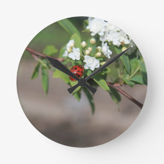 Lady Bug resting near so white flowers in bloom Round Clock