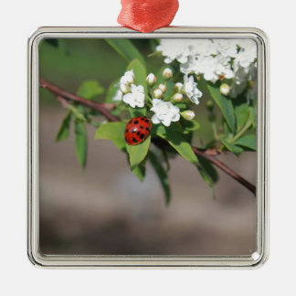 Lady Bug resting near so white flowers in bloom Silver-Colored Square Ornament