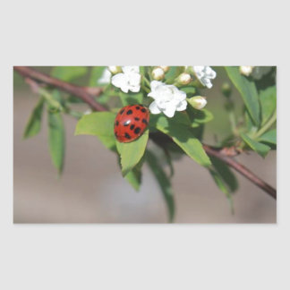 Lady Bug resting near so white flowers in bloom Sticker