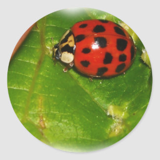 Lady Bug Round Sticker
