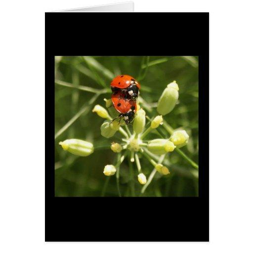 Lady Bugs Card