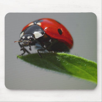 Lady But On Edge Of Leaf Mouse Pad