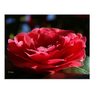 Lady Camellia Postcard