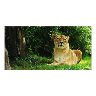 Lady Lion Relaxing Photo Card Template