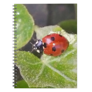 Lady nose ladybird note book 80 lined sides
