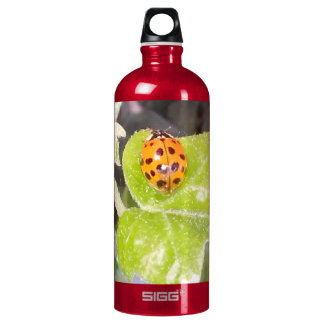 Lady nose ladybird water bottle SIGG