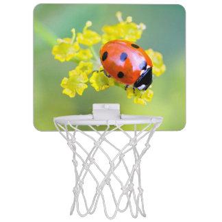 lady on top mini basketball hoop