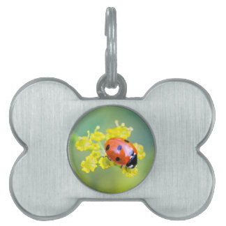 lady on top pet ID tag