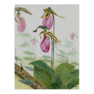 Lady Slippers Postcard