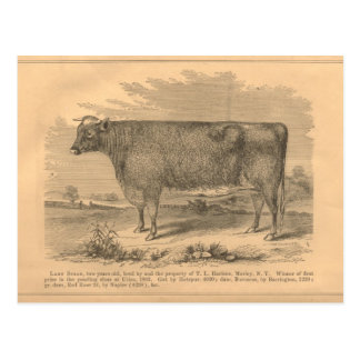 Lady Susan, First Prize Cow at Utica, 1863 Postcard