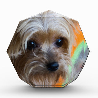 Lady Yorkshire Terrier