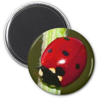 ladybeetle magnet