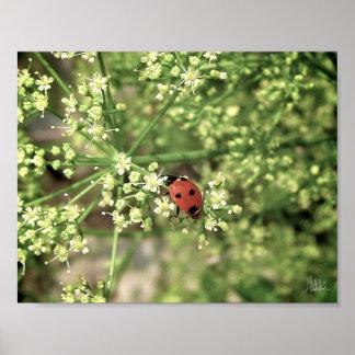 Ladybird [Art Print] Poster