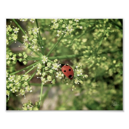 Ladybird [Art Print]