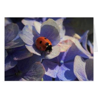 Ladybird Card