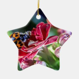 Ladybird Ceramic Star Ornament